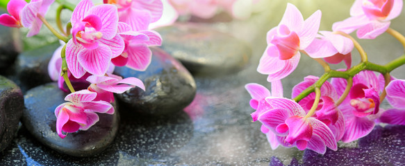 Black spa stones and pink orchid flowers .