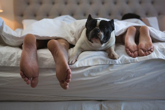 Couple lying on bed with their pet dog in bedroom