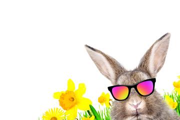 Osterkarte Wünsche Hippster Hase