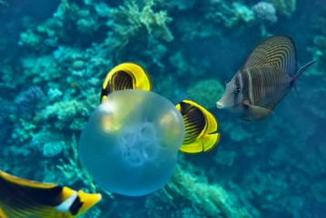 the underwater world of the coral of the Red Sea