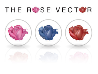 The Rose Vector