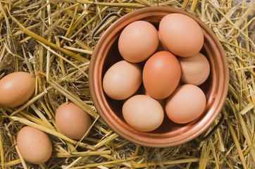Fresh eggs in the henhouse