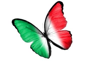 Бабочка с Итальянским флагом на крыльях, изолирована на белом фоне
