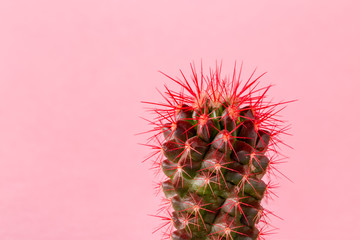 Cactus on a bright colored background