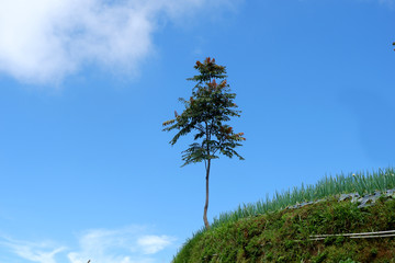 tree blue sky background