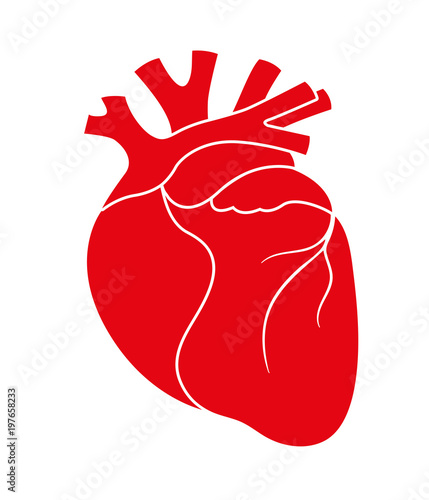 Human red heart icon