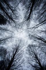 Immagini di alberi e foglie di una foresta in Toscana con la neve