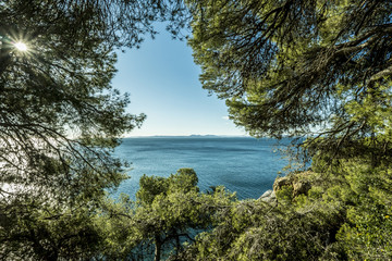 Scenic view of sea seen through branches