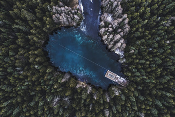 Aerial view of trees growing by lake in forest