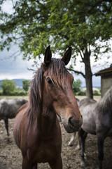 Pferde, Horses