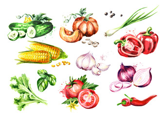 Big Vegetable set. Watercolor hand drawn illustration, isolated on white background