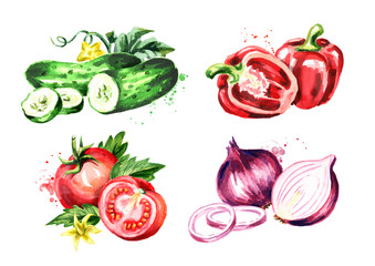 Vegetables. Watercolor hand drawn illustration, isolated on white background