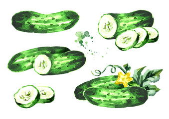Cucumber composition set. Watercolor hand drawn illustration, isolated on white background