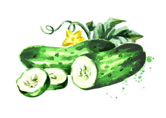 Cucumber composition. Watercolor hand drawn illustration, isolated on white background