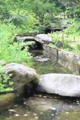 japan garden at day