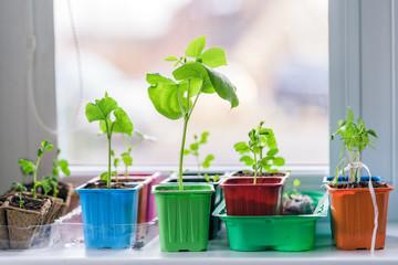 garden on the windowsill