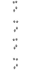 Polecat tracks. Typical footprints with long claws - isolated black icon vector illustration on white background.