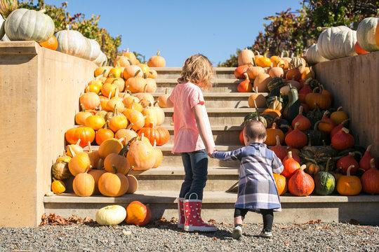 girls in pumpkin patch at vineyard
