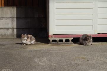 左を向く二匹の猫