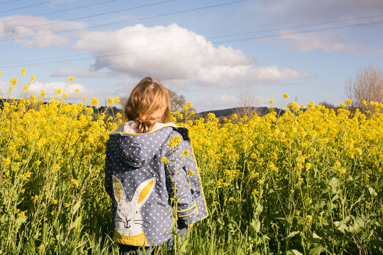 Rear view of a girl standing in mustard field