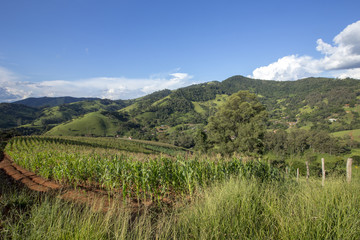 Rural landscape with corn plantation and hill