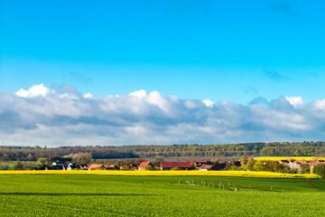 Kornfeld und Rapsfeld im Frühjahr