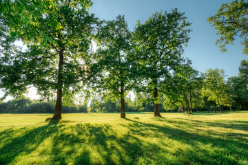 Beautiful summer landscape with oak trees at sunset