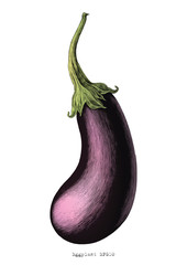 Eggplant hand drawing vintage engraving illustration on white background