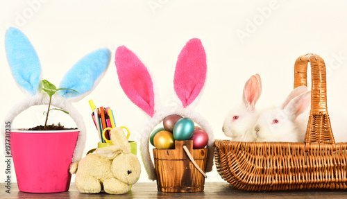 White cute rabbits in the basket easter eggs family cute bunny with white cute rabbits in the basket easter eggs family cute bunny with funny bunny ears negle Gallery