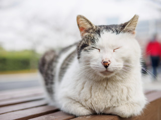 Cute cat laying on bench in park with comfortable expression, enjoy sun light and have a good dream.