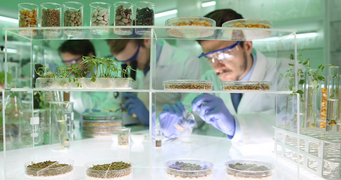 Researchers Men Doing Biological Research on Genetically Modified Plant Seeds in Agriculture Laboratory