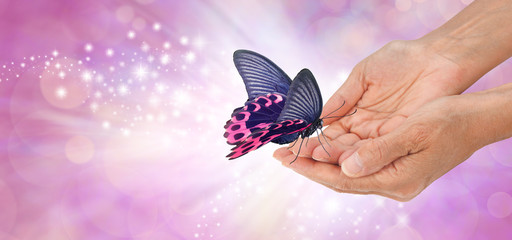 Special moment with a beautiful butterfly  - a pink and black butterfly with open wings resting on the fingertips of female cupped hands a against a pink sparkling background with white light