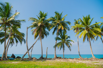 Palm trees on the ocean.