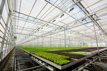 Corner of large contemporary hothouse and perspective view of green plantation of seedlings