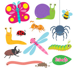 Insects are small animals set.