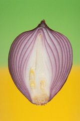 Half Shallot isolated on colour background