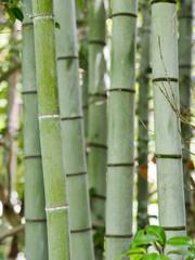 Hintergrund Bambus Stangen Wald
