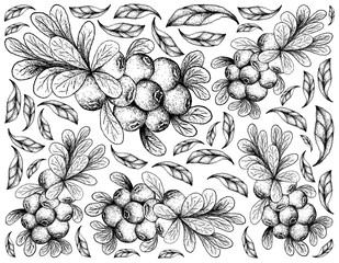 Hand Drawn Background of Ripe Cranberry Fruits