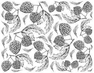 Hand Drawn Background of Balloon Berry Fruits