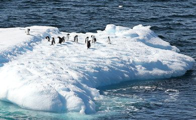 Gentoo Penguins standing on a iceberg. Melting blue ice floating in Antarctic Ocean. Antarctica Landscape