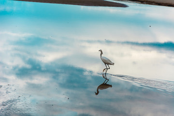 Heron on a reflective water surface