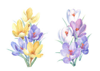 Watercolor bouquets of spring flowers set on a white background. Illustration with yellow, white and violet crocuses. Can be used as greeting cards, wedding invitations, birthday, mothers day.
