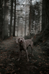 Dog along forest path