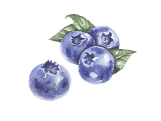 A bunch of berries. Blueberies. Watercolor