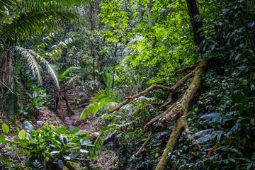 inside jungle forest / rainforest landscape