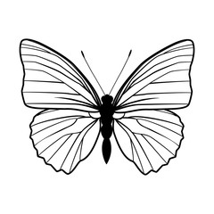 Butterfly stencil by hand drawing – stock vector