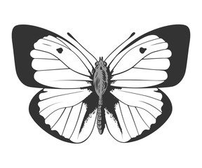 Butterfly stencil by hand drawing – vector