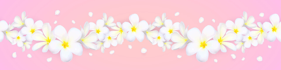 Vector seamless frangipani flowers horizontal border with flying petals on pink background