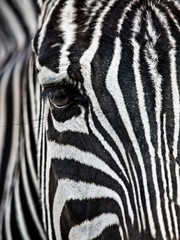 Poster de jardin Zebra Zebra's Face & Eye Close-Up