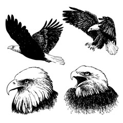 set of eagle doodle hand drawn